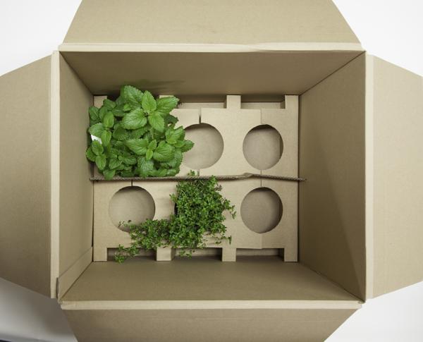 Kräuterpflanzen online kaufen