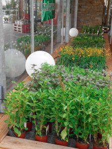 Innenräume für die Kräuterpflanzen
